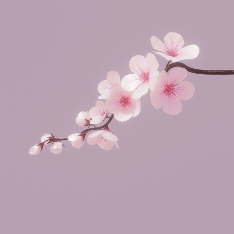 Pin Oleh Luiza Di 3d Bunga Sakura Bunga Gambar Bunga
