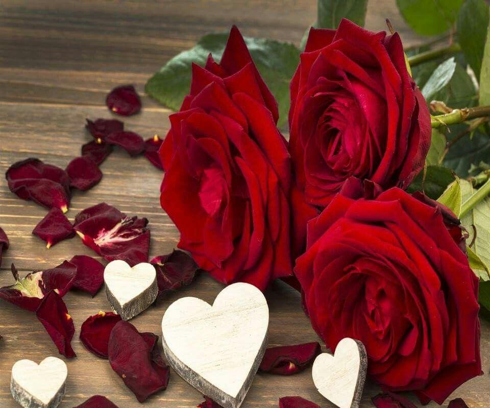 flores preciosas mi amor rosas imgenes del corazn para usted for you
