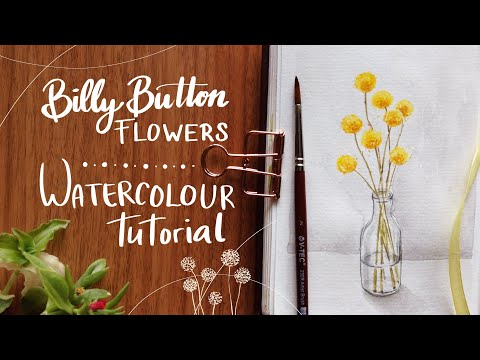 Billy Button Flowers Step By Step Watercolor Tutorial Youtube In 2020 Watercolour Tutorials Button Flowers Step By Step Watercolor