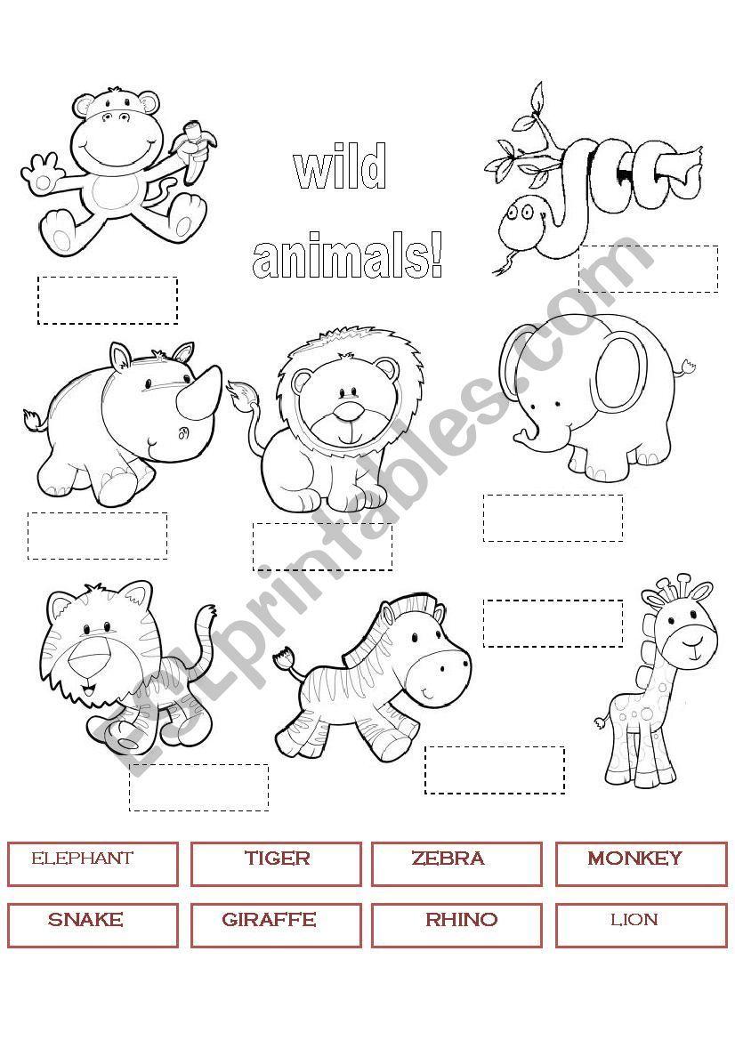 WILD ANIMALS 1 worksheet Animal worksheets, Animals wild
