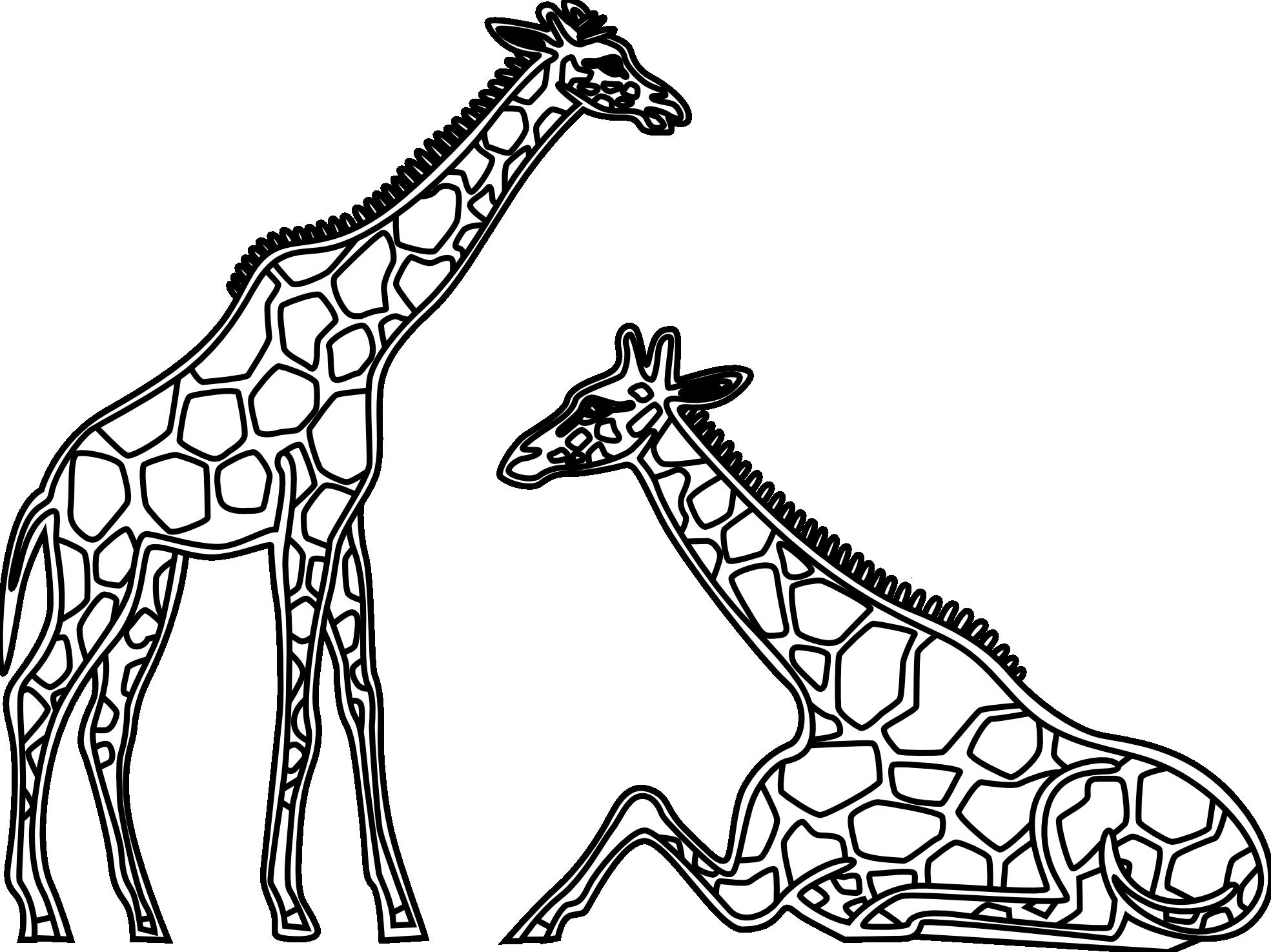 line drawing giraffe google search clean lines pinterest rh pinterest com