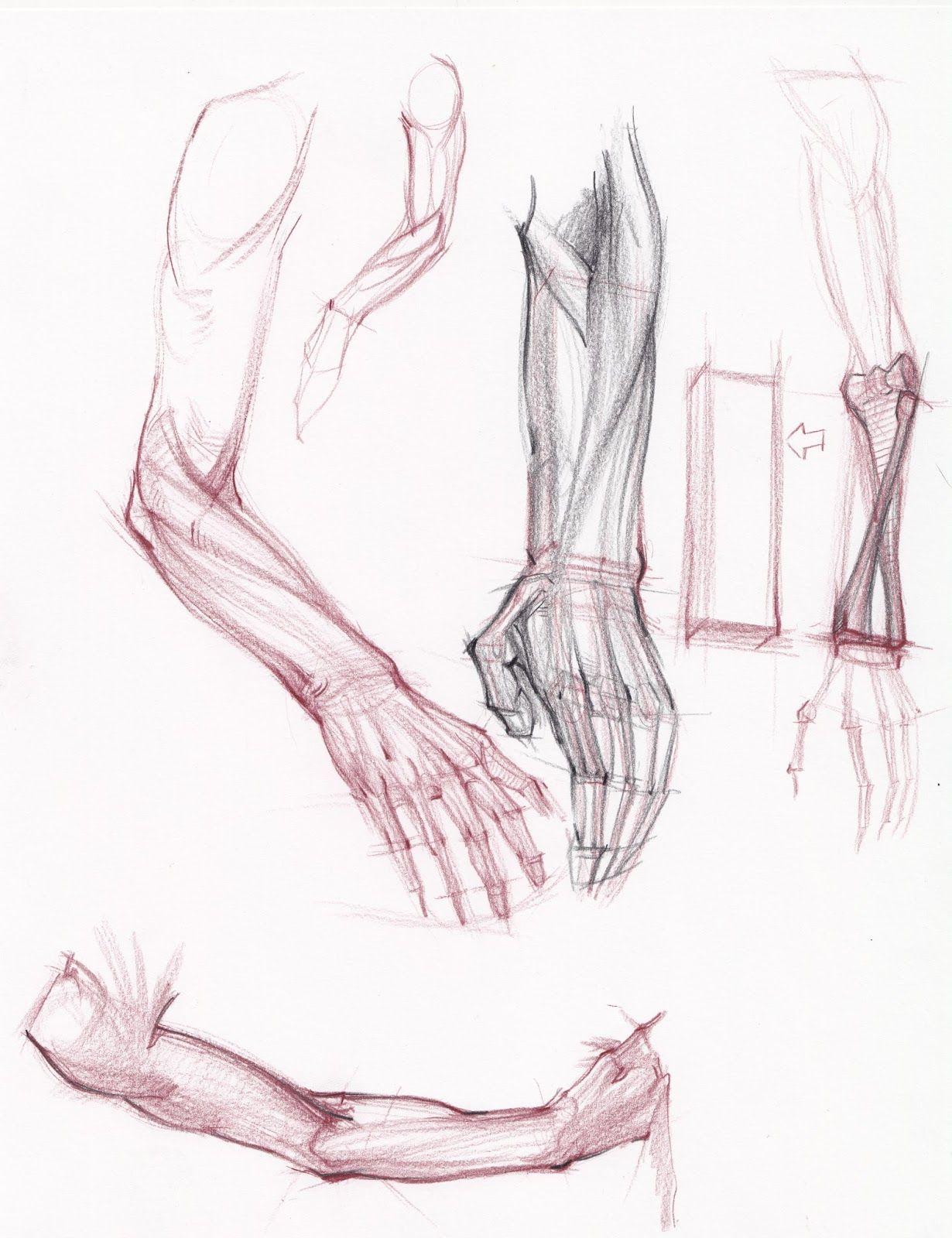 Pin de My Ng en anatomy - body   Pinterest   Anatomía, Ilustración ...