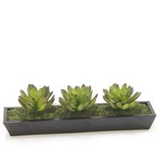 Decorative Tray Succulents
