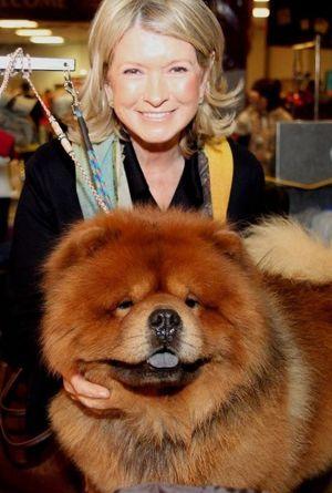 Martha Stewart And Genghis Khan A Westminster Winner So Fluffy I