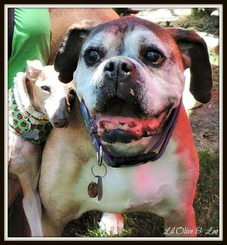 Rip Olive And Leo Her Love Bug Puppy Mills Animals Dogs
