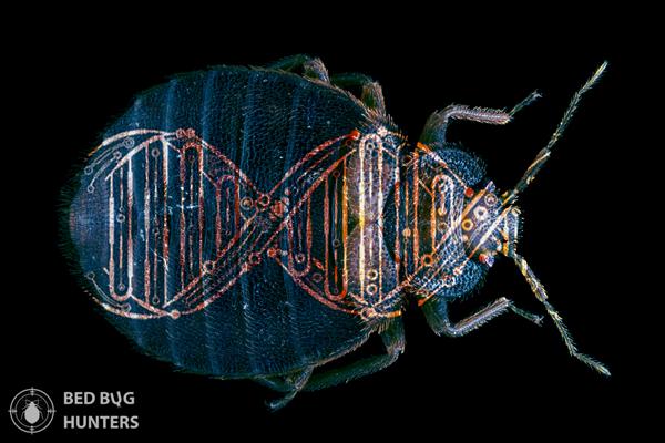 Bed bugs' most recent evolution artwork Pest control bed