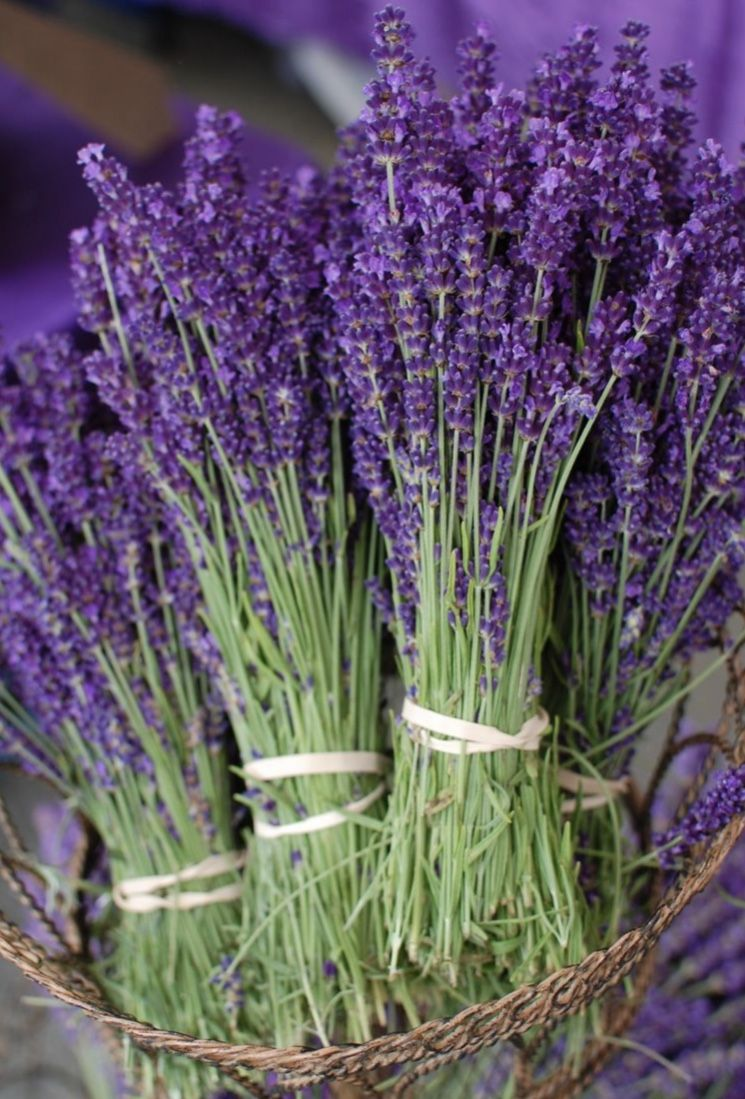 Pin By Sarah Sommers On Lovely Lavender In 2020 Diamond Painting Harvesting Lavender Lavender