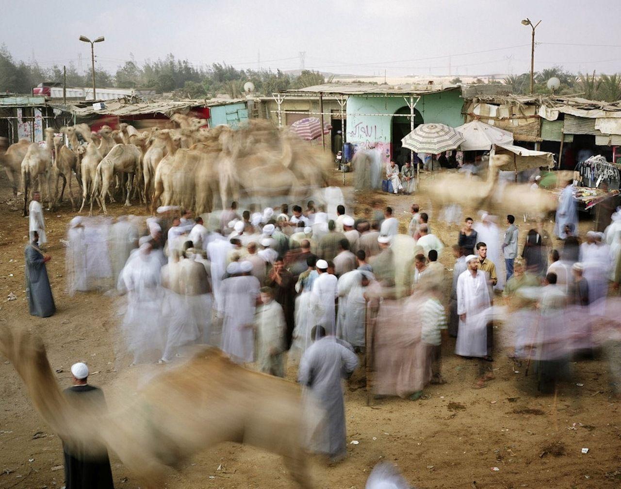 Cairo Camel Market (Martin Roemers)