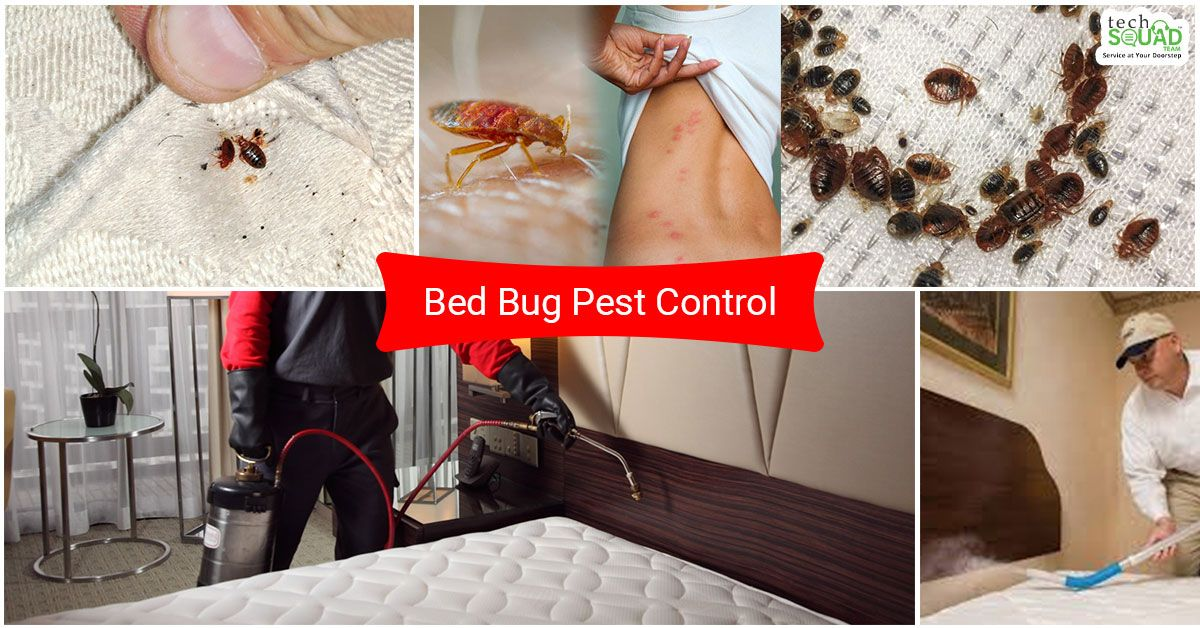 If are you looking for the best bedbug pestcontrol