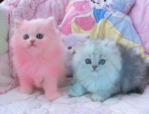 Pastel kittens