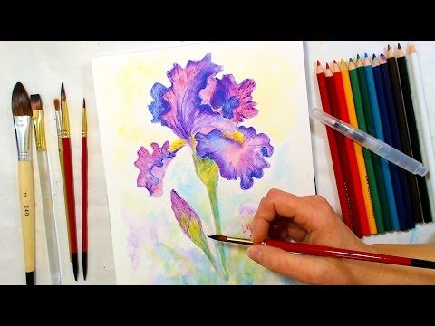 Iris In Watercolor Pencil Tutorial Watercolor Pencil Art