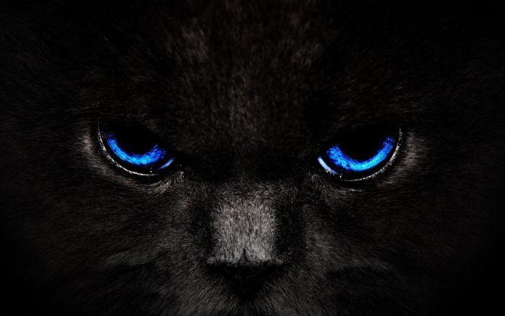 Schwarze Katze Mit Blauen Augen Schwarze Tapete Katzen