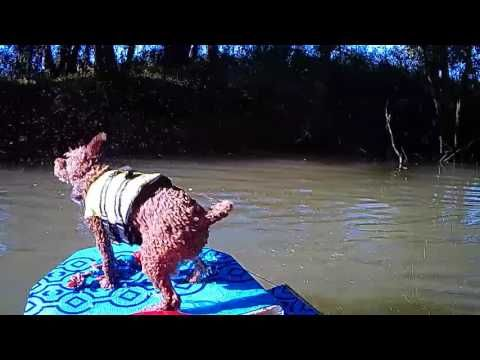 Kayak Dog Ramp Flip Down And Up Dog Ramp Dogs