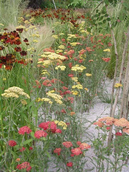 Kiesgarten Steine, Gräser und bunte Blumen Schafgarbe - gartengestaltung mit steinen und blumen
