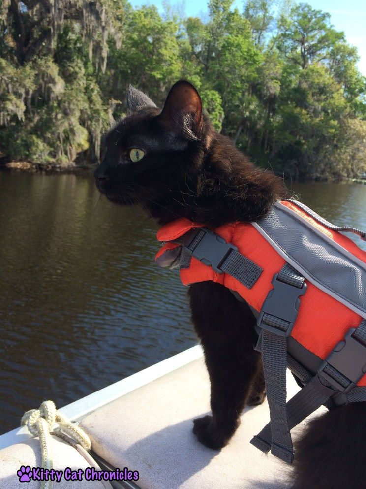 Get The Gear 10 Must Have Accessories For Your Adventure Cat With Images Adventure Cat Cat Training Cat Care