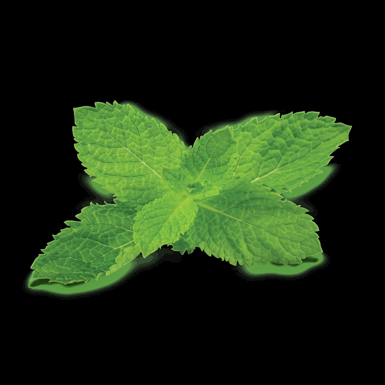 Mint Long Blooming Perennials Perennials Low Maintenance Annuals Vs Perennials