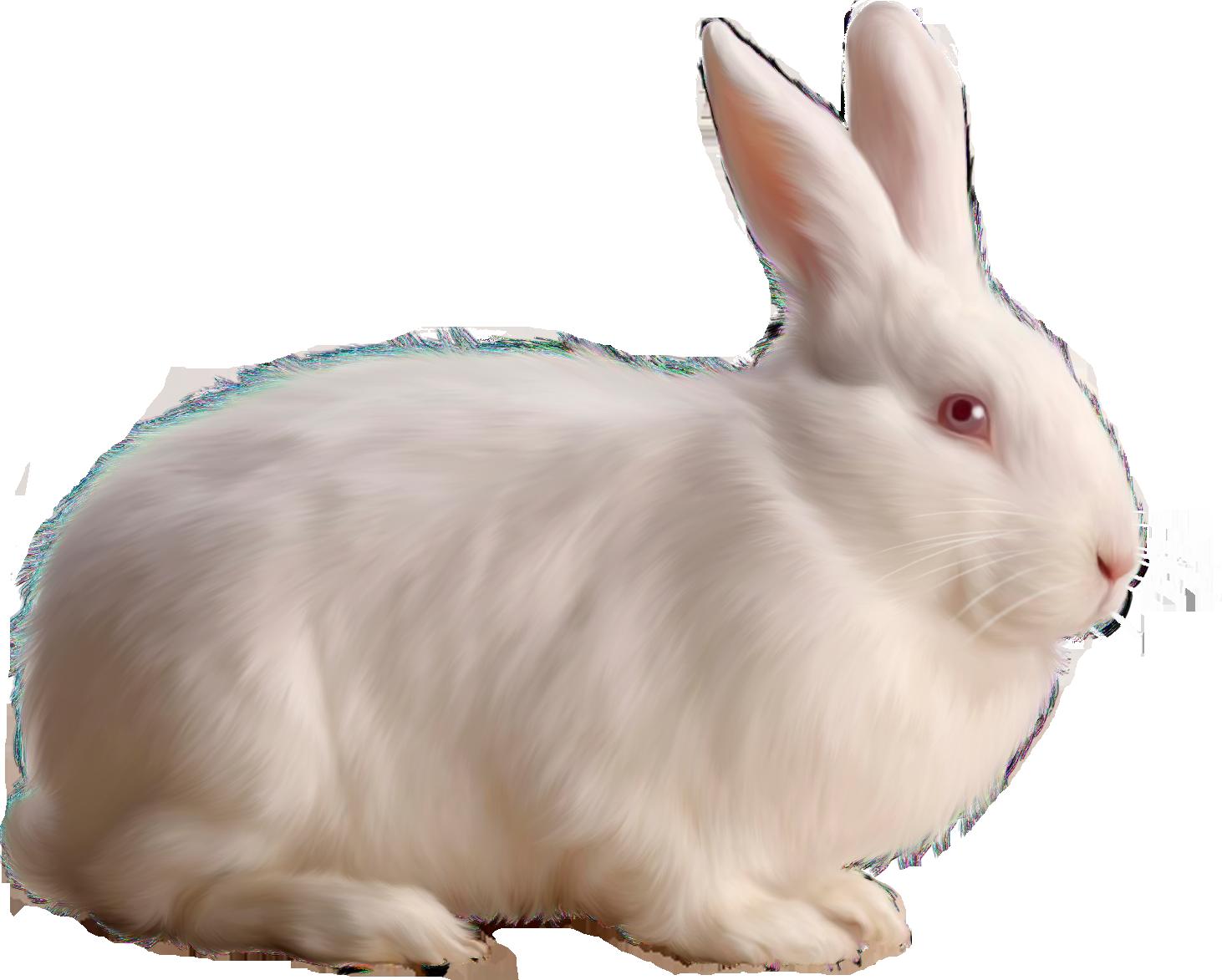 Albino Rabbit Png Image Rabbit Colors Rabbit Png Albino Rabbit