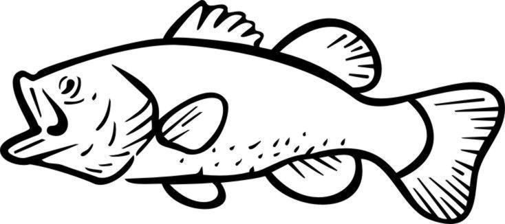 Largemouth Bass Fish Outline   Fins & Harvest - Humor & Craft ideas ...