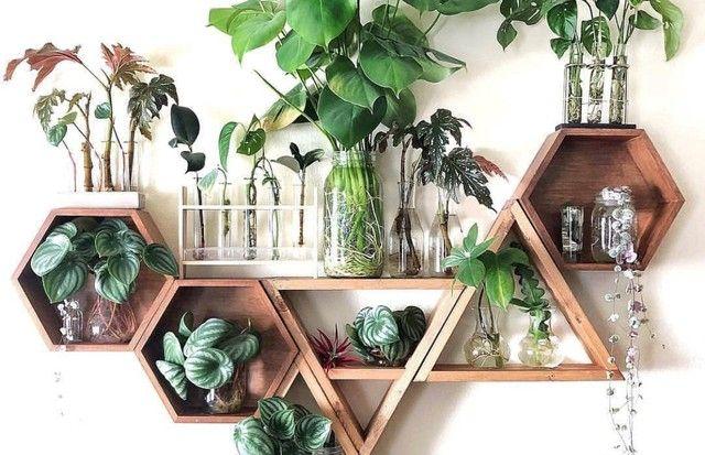 As melhores plantas de interior para purificar o a