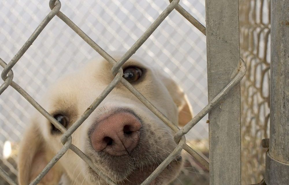 Michigan Is Now A No Kill State For Shelter Animals Animal