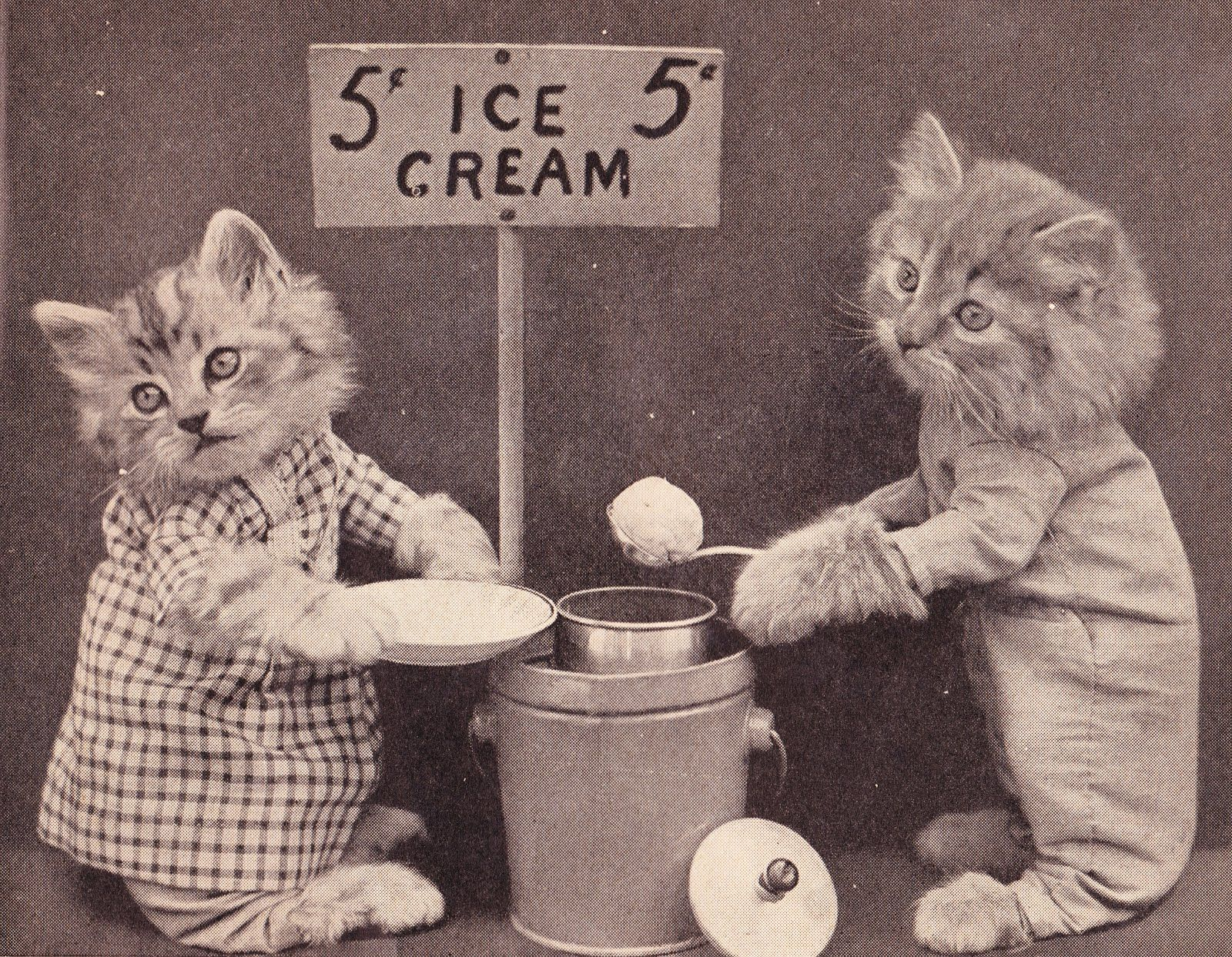 Image result for The LOLcats Of Yesteryear
