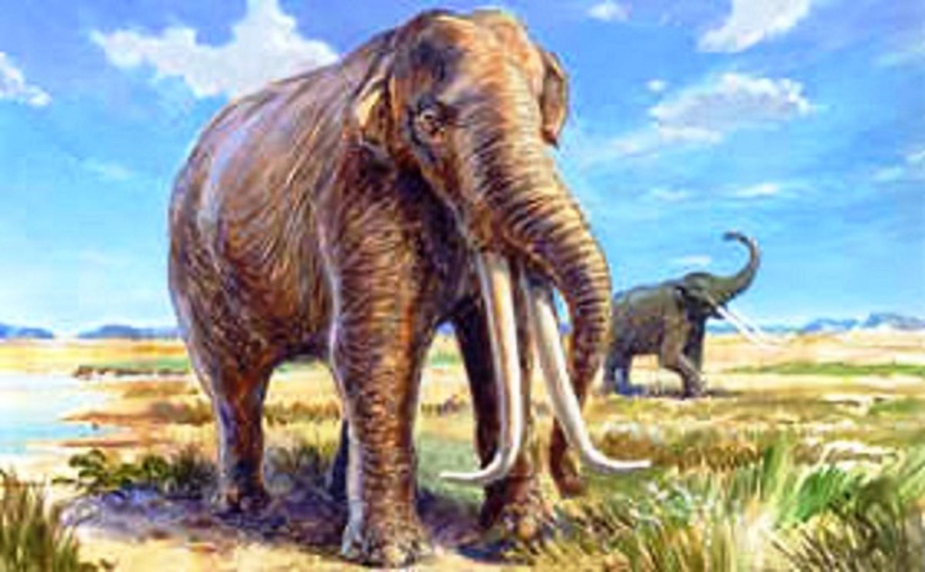 Art illustration { Prehistoric Animals } Prehistoria