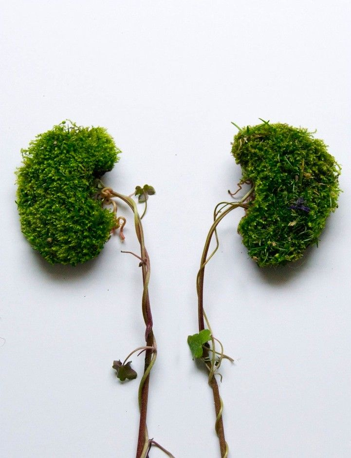 Camila Carlow recolecta plantas silvestres y, en un trabajo ...
