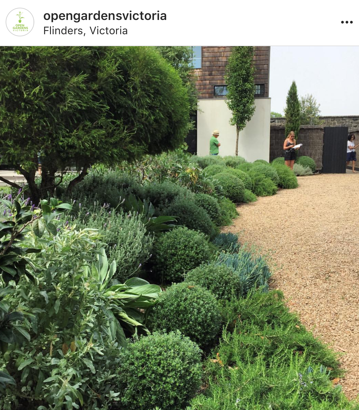 Plant Combinations Rosemary Westringia Chalk Sticks Australian Garden Design Plants Outdoor Gardens