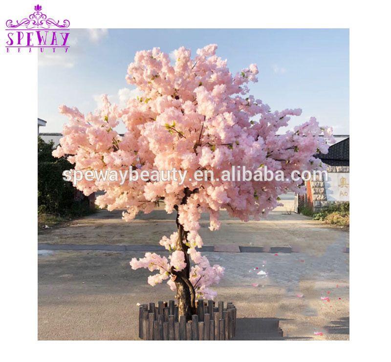 Time To Source Smarter Cherry Blossom Tree Flowering Trees Sakura Cherry Blossom