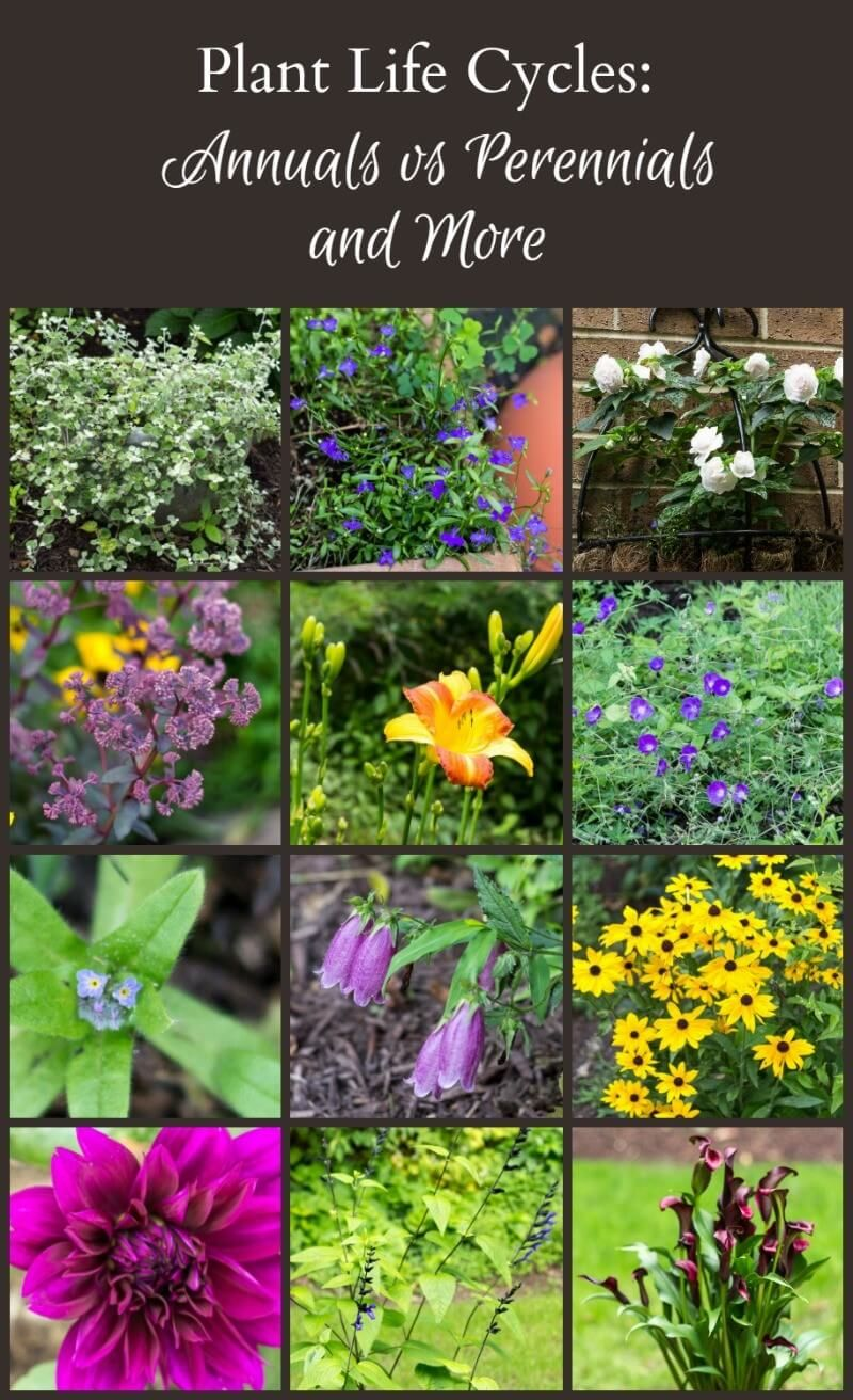 Plant Life Cycles Annuals Vs Perennials And More Pinterest