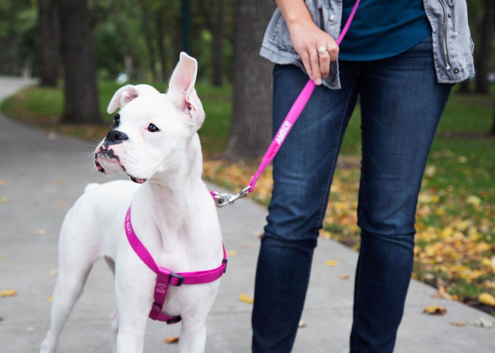 Harness Vs Collar Which Is Best For Your Dog Dogs Puppy