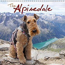 Airedale Terriers 2018 Calendar The Alpinedale 2018 Mountaineering With An Airedale Terrier Calvendo Animals Airedale Terrier Pitbull Terrier Terrier