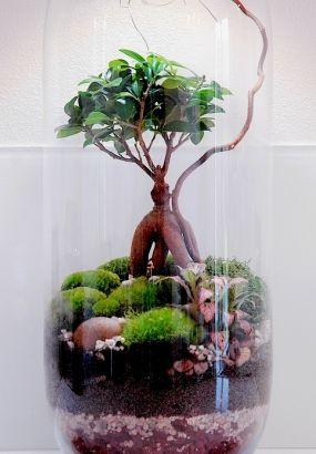 Diy Creer Un Terrarium Avec Des Succulentes Faire Un Terrarium