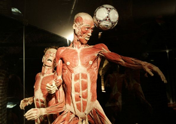 The plastinated bodies of two men are displayed at the Korper Welter exhibition by doctor Gunther von Hagens at les Caves de Cureghem on January 19, 2009 in Brussels, Belgium.