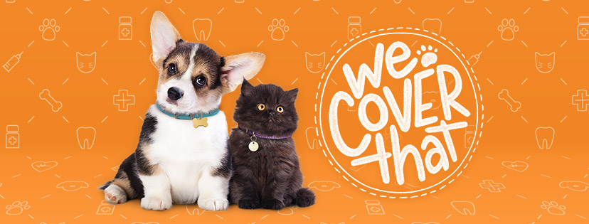 ASPCA® Pet Health Insurance is dedicated to finding the