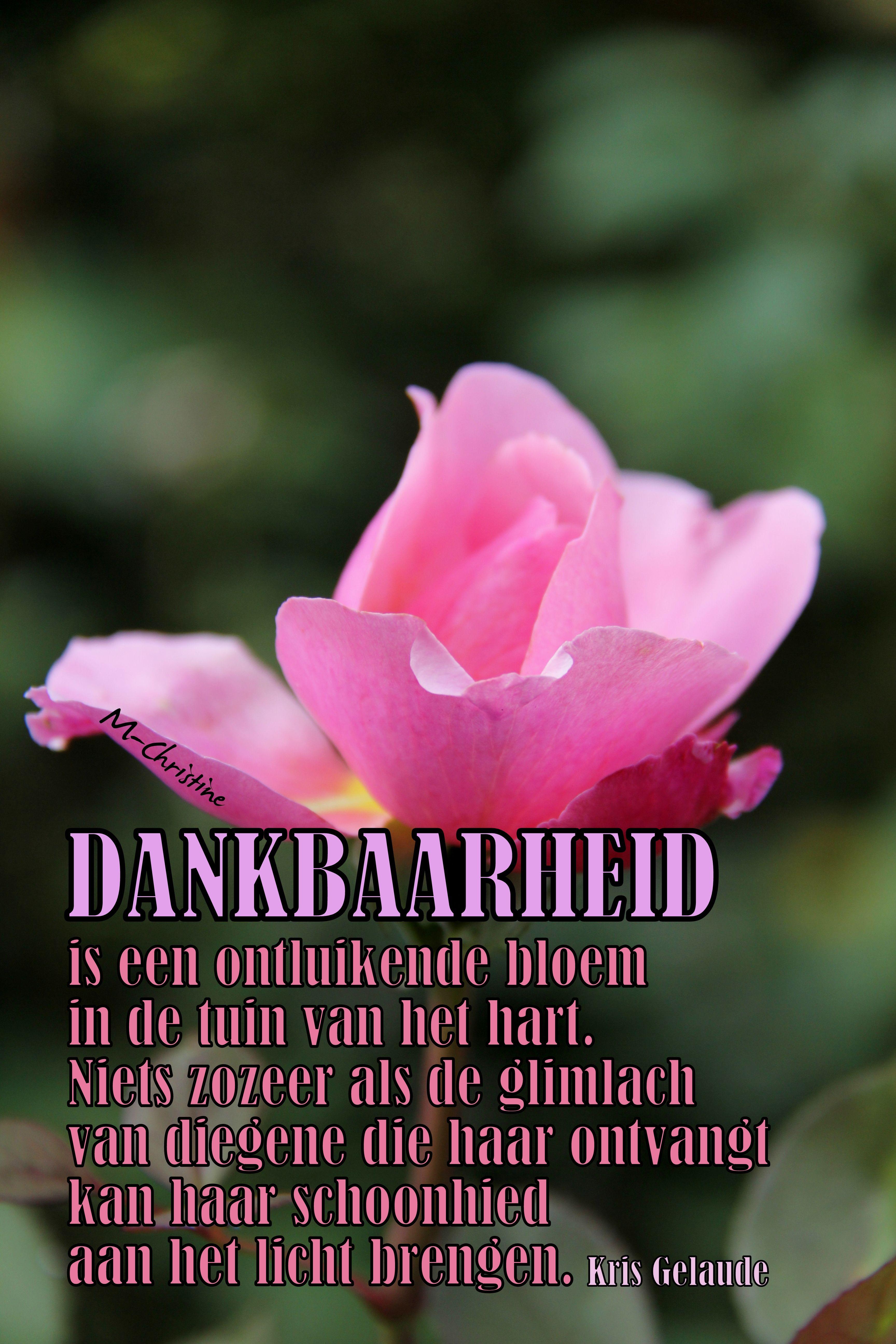 Citaten Over Bloemen : Dankbaarheid is als een ontluikende bloem rouwgedichten
