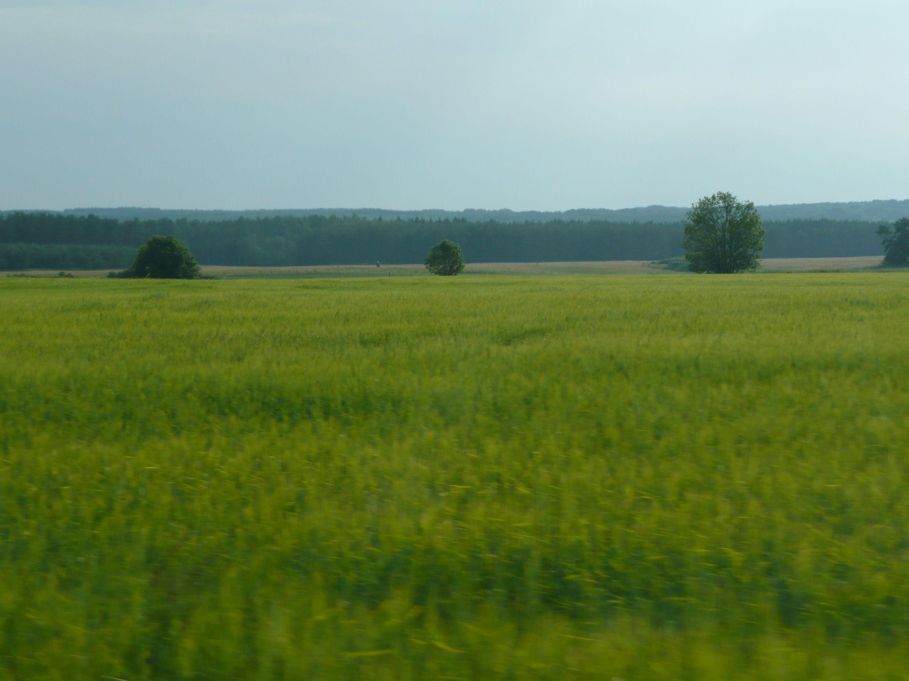 Österlen, Sweden fields