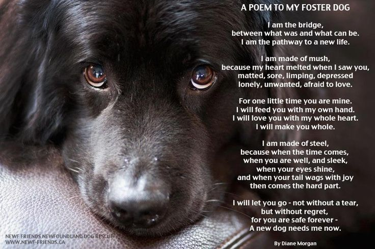 Pin By Andi Frame On To Bark Foster Dog Foster Dog Quotes Dog Poems