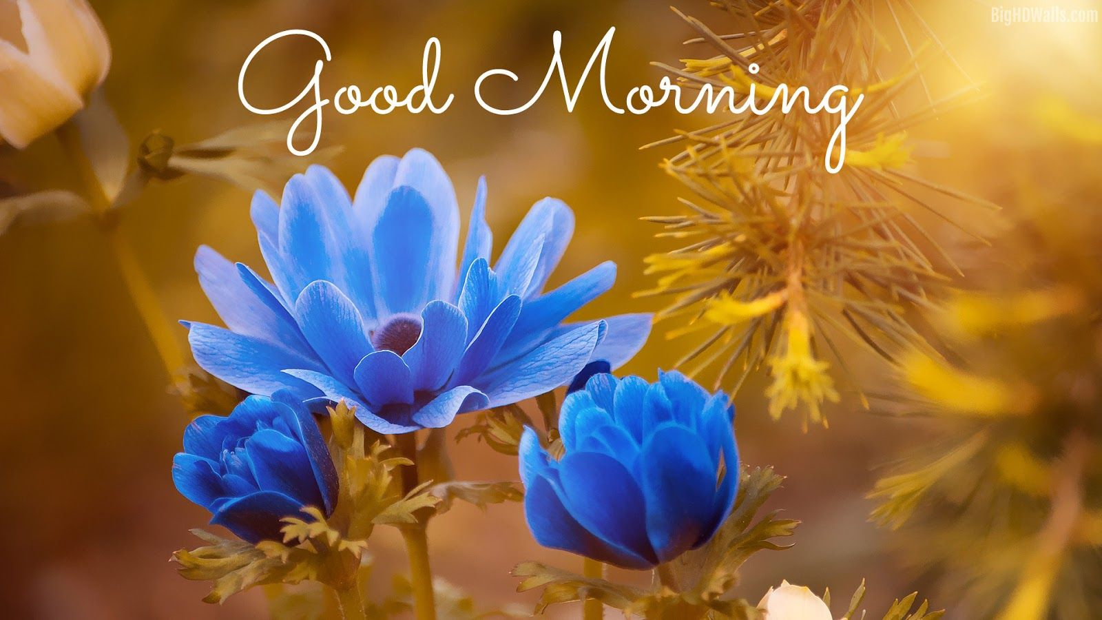 Good Morning Images With Flowers Hd Funny Good Morning Images