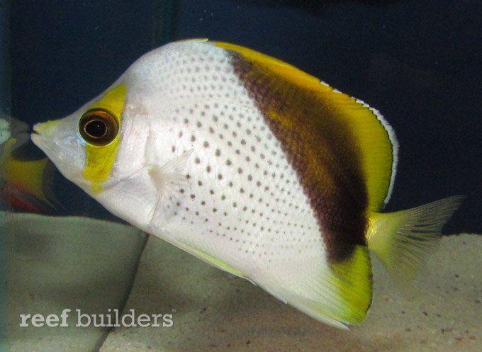 Rare Marine Fish Aplenty At House Of Fins Splash 2012 Marine