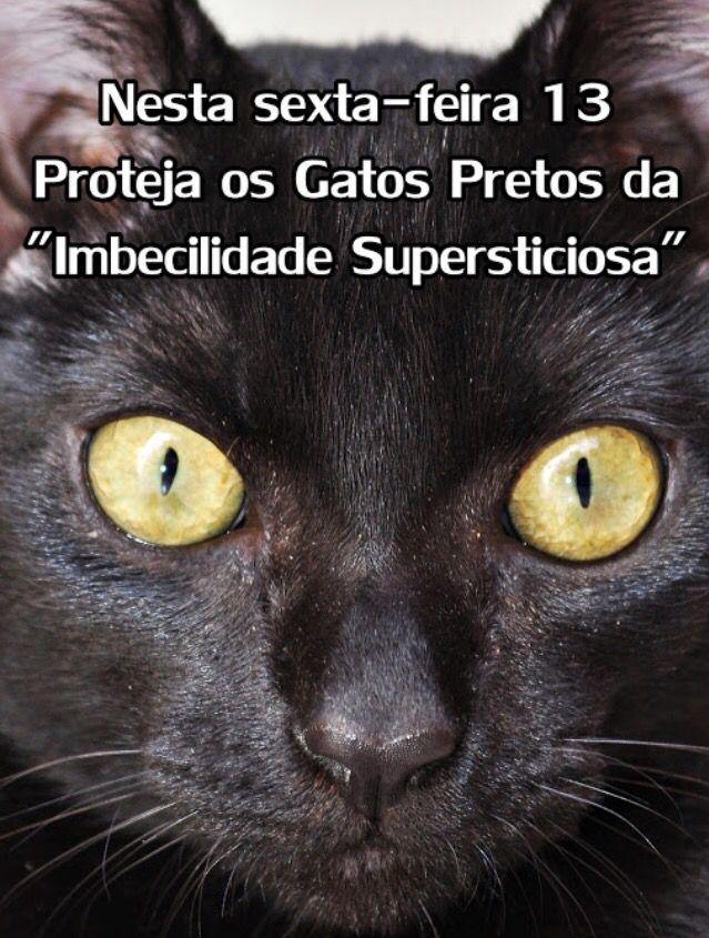 Sexta Feira 13 Proteja Os Gatos Pretos Gatos Gato Fofo