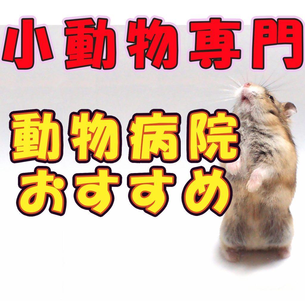 関東の小動物専門の動物病院まとめ エキゾチックアニマル 動物看護士 動物