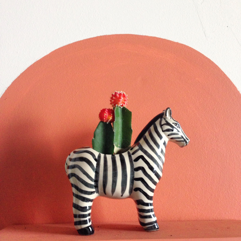 Zebra planter | C A S I T A. | Pinterest | Jardins, Cactus and ...