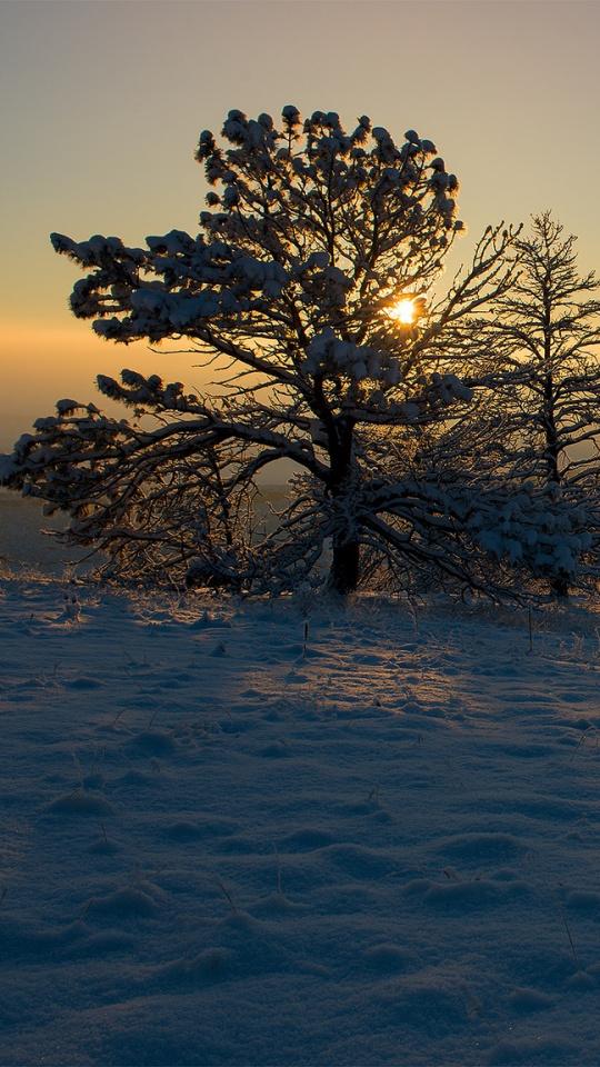 Download 540x960 Wallpaper Morning Tree Snow Sunset Dawn Sunset Wallpaper Sunset Nature Pictures