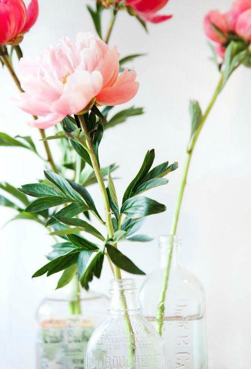 Pivoines home pinterest pots fleur et pivoines roses Fleurs pivoines