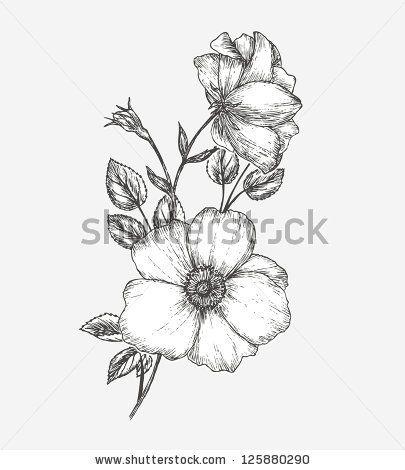 f3d5cefed Card with dogrose flower. Wild rose by Vasilyeva Larisa, via Shutterstock