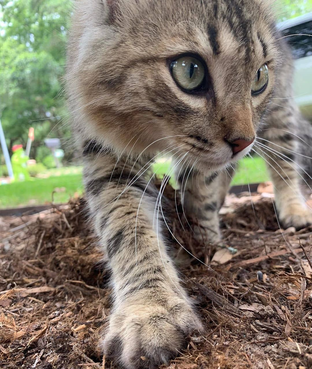 I M Hunting Go Check Him Out The French Kat Follow Cute Cats70 For More Pictures Allcatphotos300 Lovelycaton Cat Online Cats Beautiful Cats