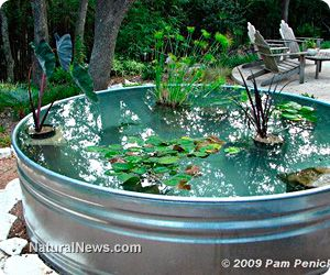 Aquaponics on pinterest aquaponics hydroponics and fish for Mcclung s garden pool