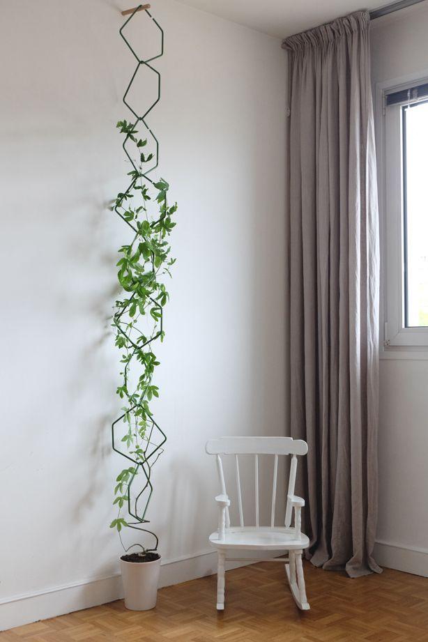 grön klätterväxt inomhus