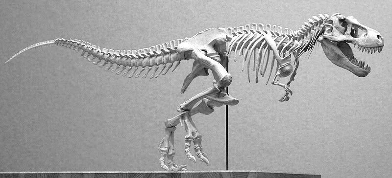 Pin by Kate Pfeilschiefter on Extinct Life | Animal